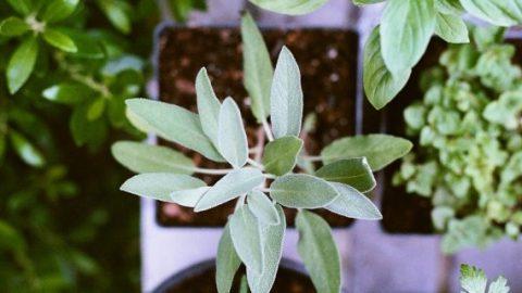 Pot plants from garden