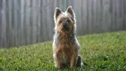 Dog in a backyard