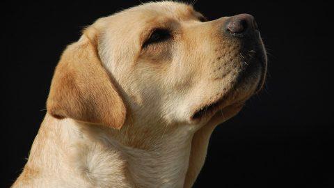 Drug sniffer dog