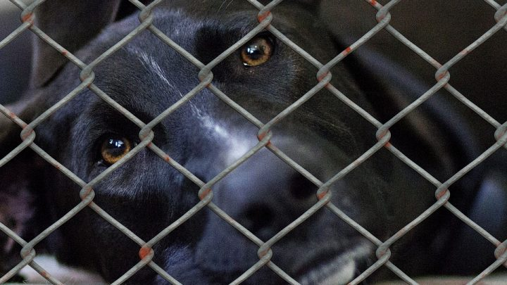 Dog in cage at the pound