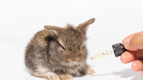 Bunny testing