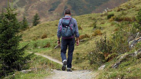 Backpacker walking in a forest