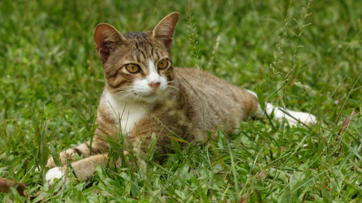 Pet cat sitting on grass