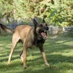 Dog Attacks: The Liability of Owners