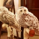 Stuffed Owl Better than Defence Lawyer!