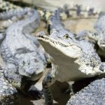 World's Most Secure Jail: Crocodile Prison Island