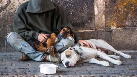 Homeless man with two pet dogs