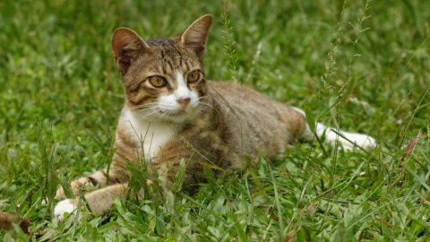 Cat sitting on green grass