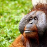 'Carpets for Communities' and 'The Orangutan Project'