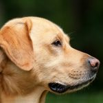 Motion Passed to End Sniffer Dog Operations and Introduce Pill Testing