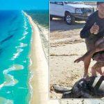 Turtle 'Surfers' Under Investigation