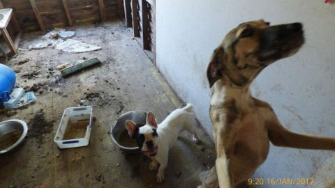 Dogs neglected