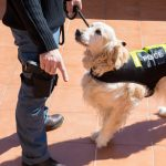 Sniffer Dogs: False Positives and Limits to Police Powers