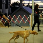 Sniffer Dog Operations – Ineffective, Intrusive and Dangerous