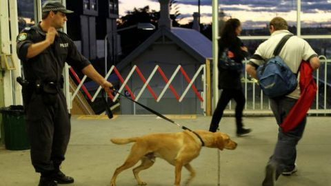 Police with a sniffer dog
