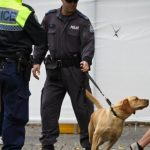 The High Cost of NSW Sniffer Dog Operations