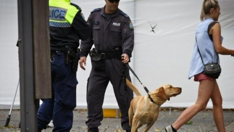 Sniffer dog operations