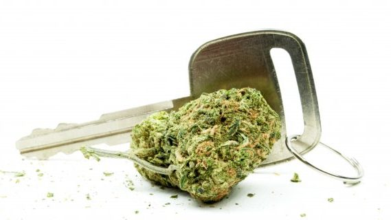 Drug driving and cannabis