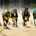 NSW Greyhound Racing Industry Fails to Reform