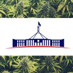 Cannabis Legalisation is Coming to Canberra