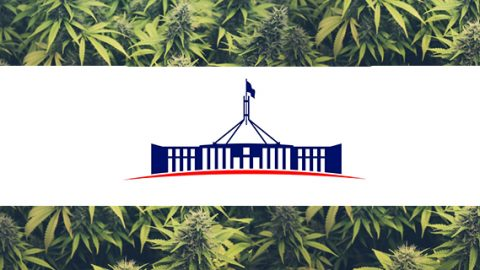 Cannabis and the Parliament House
