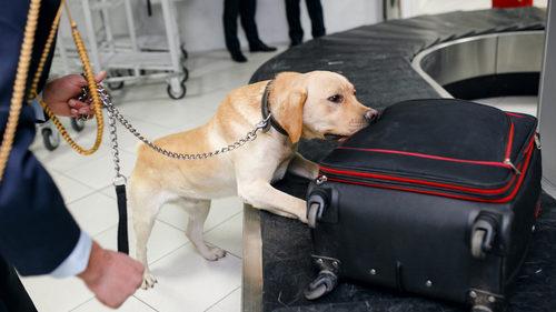 Drug dog airport
